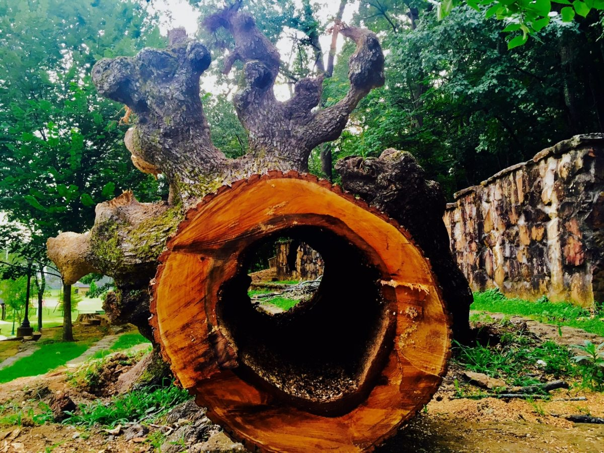 Venerable fallen tree at Avondale Park Amphitheater remembered and celebrated on social media