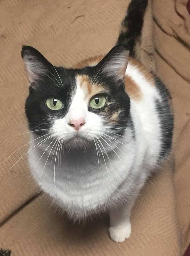 Birmingham, Steel City Cat Rescue, animal shelters, no-kill shelters, no-kill rescues, animal rescues, cat rescues