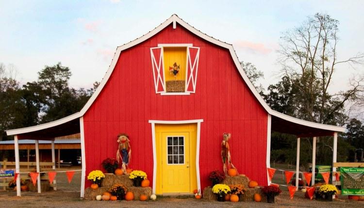Birmingham, 4D Farm, Cullman, October, festivals, pumpkin patch, pumpkins