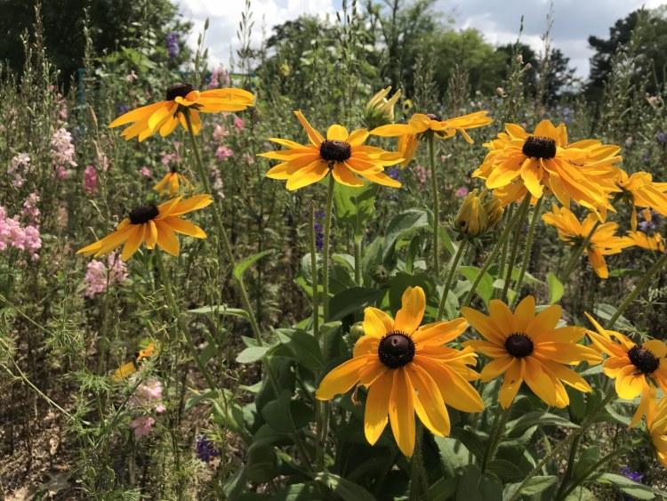 Birmingham, Alabama, Shared Economy, community garden