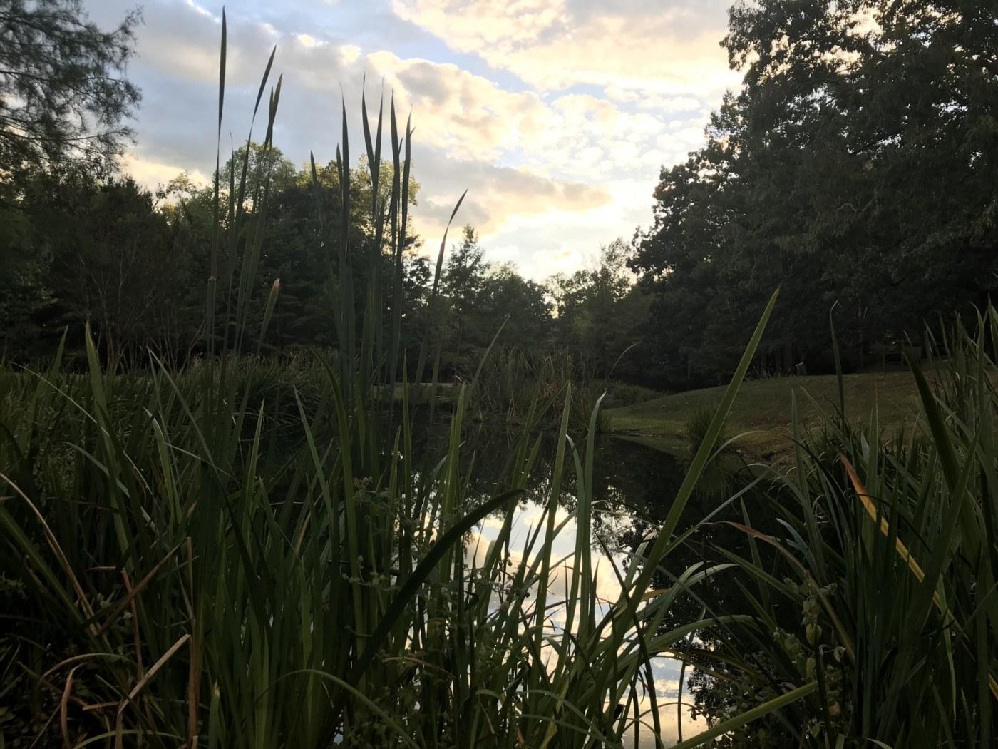 Birmingham, Alabama, original SPC campus, Samford University, pond