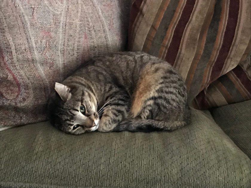 Birmingham, Purrfect Love Cat Rescue, cat rescues, feral cat rescues, no-kill rescues, no-kill shelters