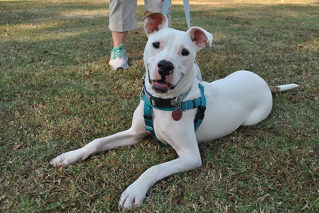Adopt a pet from one of these 10 animal rescues in Birmingham, including Purrfect Love Cat Rescue and Peace, Love and Dog Paws Rescue, Inc.