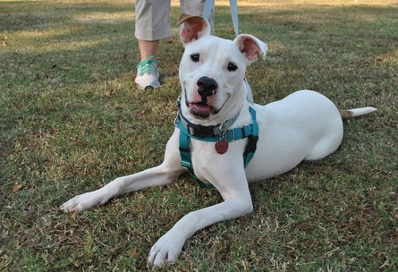 Birmingham, Peace Love and Dog Paws Rescue, no-kill shelters, no-kill rescues, animal shelters, animal rescues