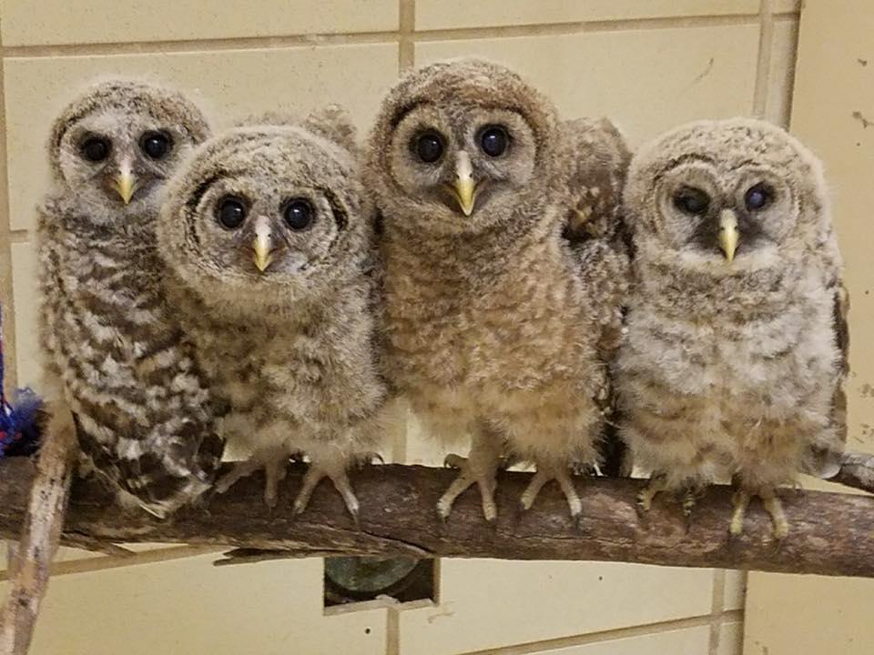 Take a 5 minute break today. Binge watch lovable Alabama Wildlife Center videos
