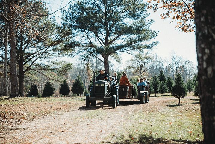 Clear Creek Christmas Tree Farm, Alabama, Christmas tree farms