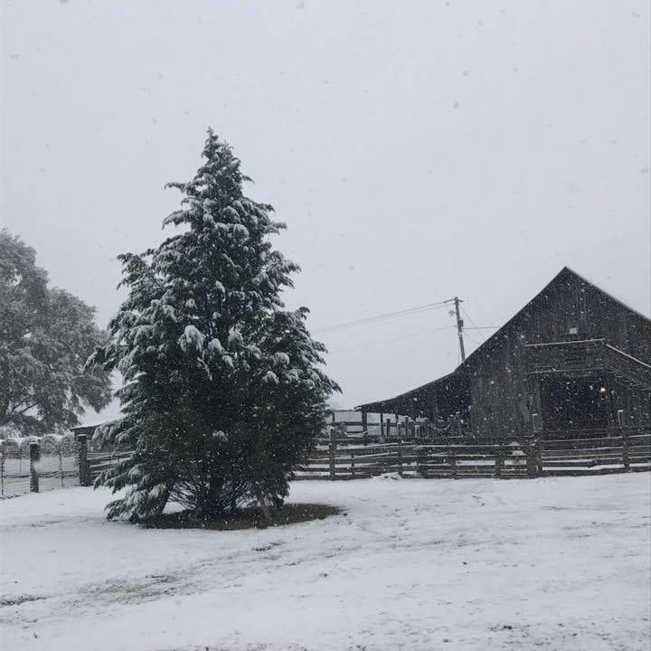 Old Baker Farm, Alabama, Christmas tree farms