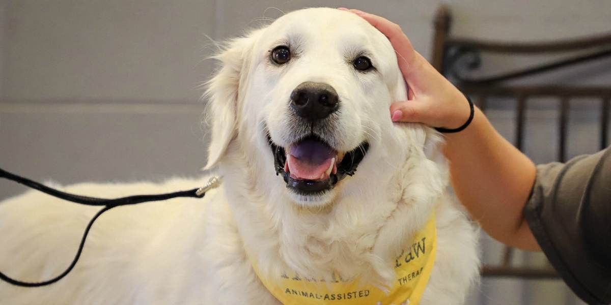 Animal-Assisted Therapy: Big changes are afoot at Birmingham's Hand in Paw