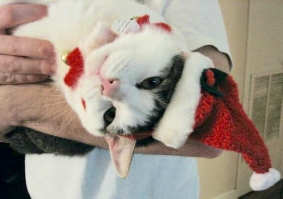 Top places in Birmingham to find holiday gifts for your pet