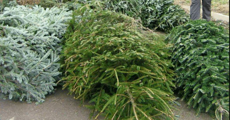 Christmas Tree Recycling Program Accepting Trees