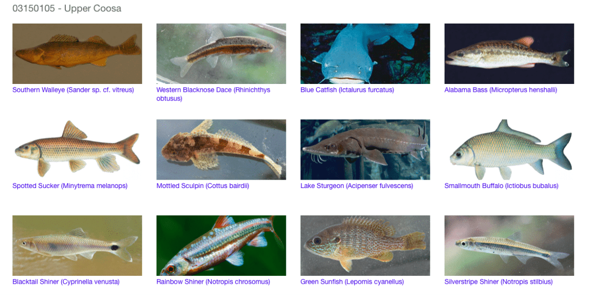 "Discover ""Facebook for Fish"" featuring the Black Warrior, Cahaba, Coosa and Mobile watersheds"