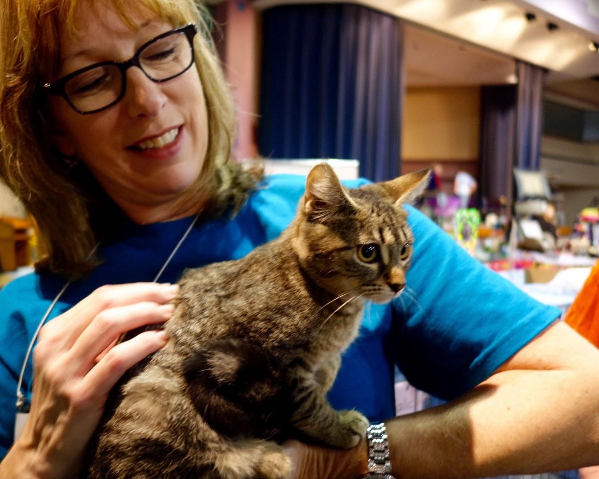 38 weekend events in Birmingham, including the Feline Fanciers Cat Show