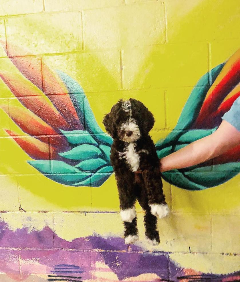 Birmingham, Alabama, Newcomers' guide to Birmingham, mural, dog, Wings of Avondale