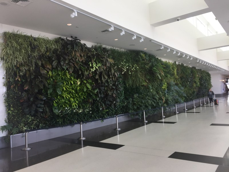"""Murray Johnston is one of 5 Birmingham artists whose work you want to know. Here's her """"living wall"""" at the Birmingham Ariport."""