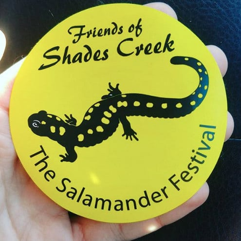 You can see lots of salamanders in Alabama at the Salamander Festival in Homewood next weekend.