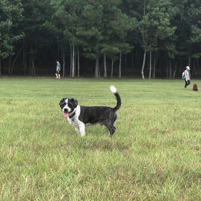 Birmingham, Alabama, Red Mountain Park, Remy's dog park