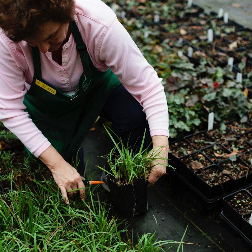 Birmingham Botanical Gardens, Spring Plant Sale, volunteer
