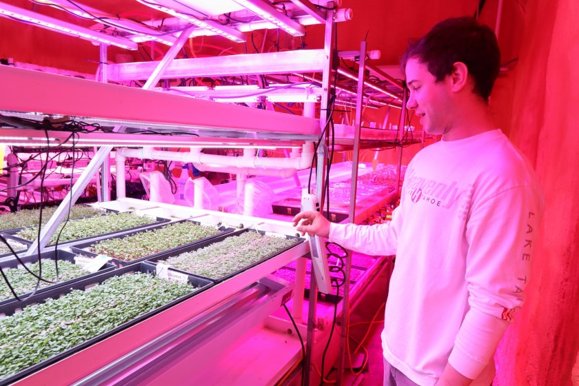 Pictured are rows of micro-greens in incubators, illuminated by multi-colored grow lights that turn the entire room a fluorescent pink. Raburn's son, Kyle, head of marketing for the operation (pictured), explains the growth process of the microgreens. They currently sell the microgreens to local fine-dining restaurants. (Photo by Christine Hull for Bham Now)