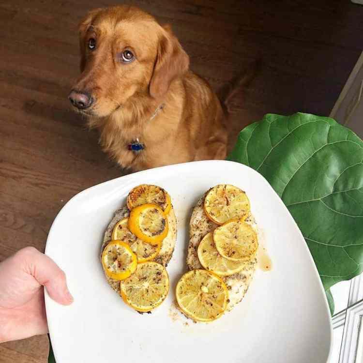 Birmingham, Alabama, till, home cooking, dog