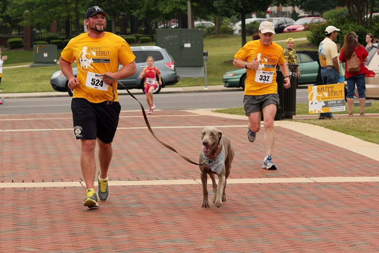 Birmingham, Mutt Strut, Hand in Paw, charity run, animals, fundraiser
