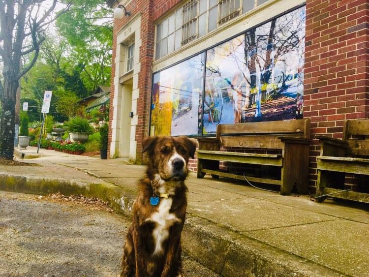 Cedar, SHOPPE's dog and faithful companion. Photo by Pat Byington for Bham Now