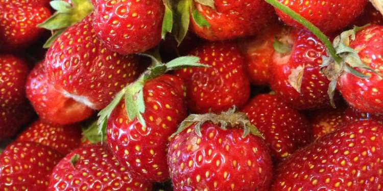 Nothing tastes like a fresh-picked strawberry