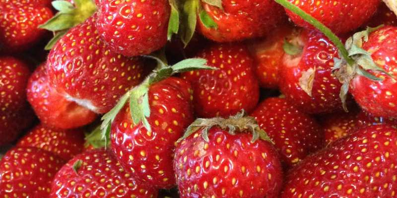 Nothing tastes like a fresh-picked strawberry