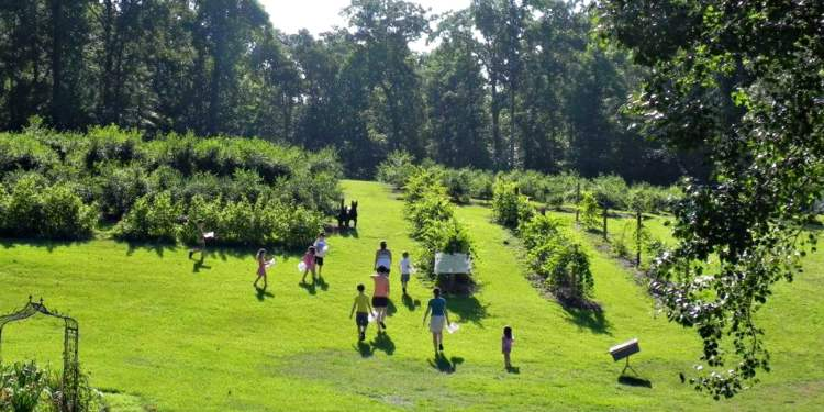 Judy Bee's Honey and Berry Farm is another u-pick farm.