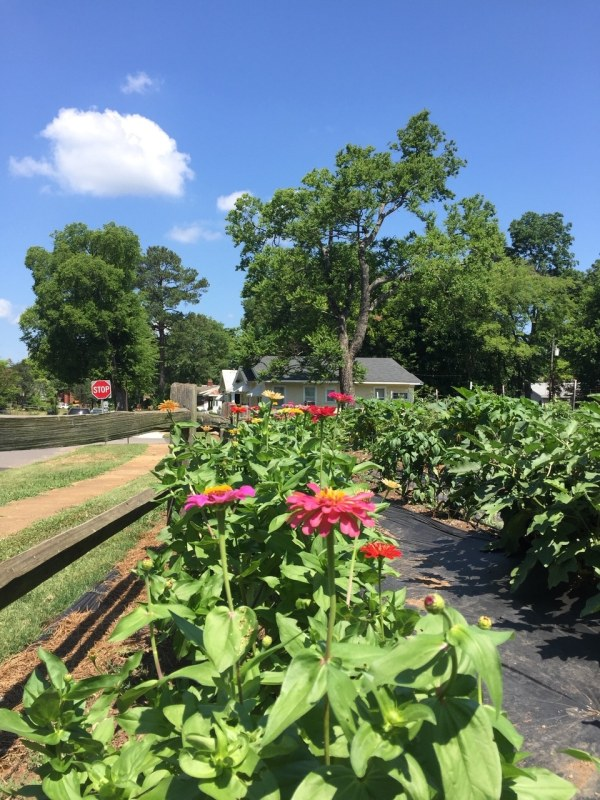 Grace House Gardens is one of several community gardens in Birmingham.