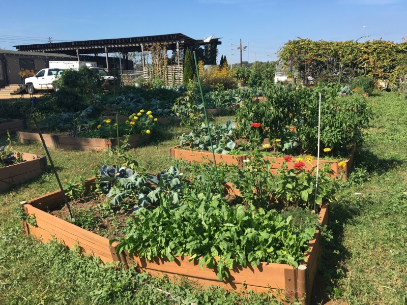 Community members can lease one of 38 raised beds in Jones Valley Teaching Farm's Community Garden.