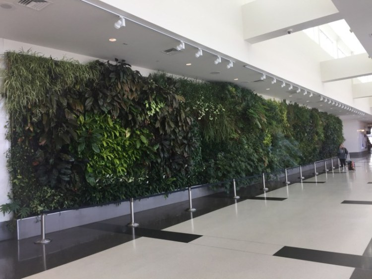 """The """"living wall"""" at the Birmingham Shuttlesworth International Airport is one of the cool features there."""