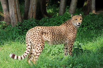 National Tell a Joke Day Why dont they play poker in the jungle? Theres too many cheetahs