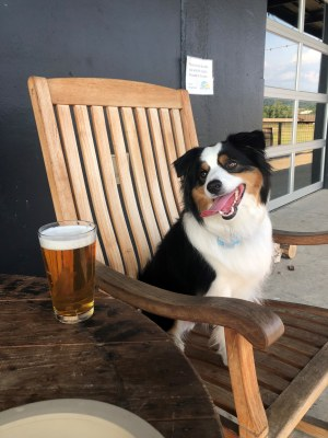 A dog looking at a New Birmingham Beer called Coopers Coffee Pal Ale by Back Forty Beer Company