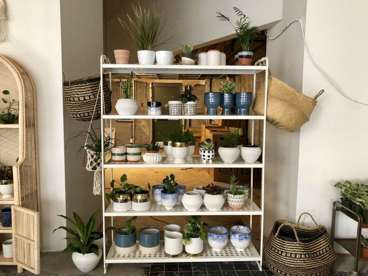 Pot plants on shelf