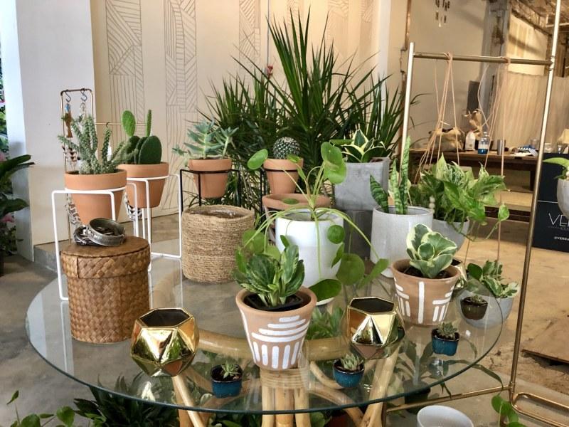 Various pot plants on display