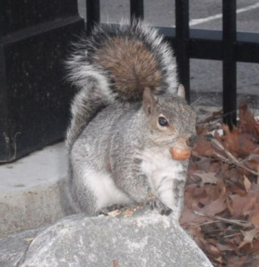 National Tell a Joke Day How do you make a squirrel laugh? Climb up a tree and act like a nut