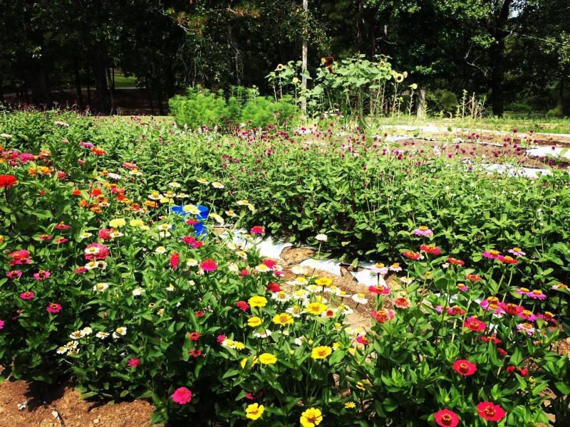 The garden at King's Garden