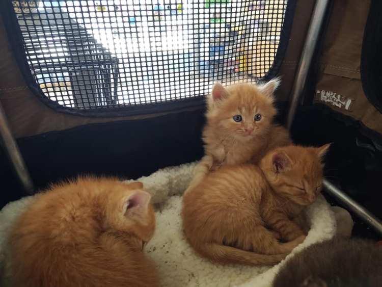 Birmingham, Kitty Kat Haven & Rescue