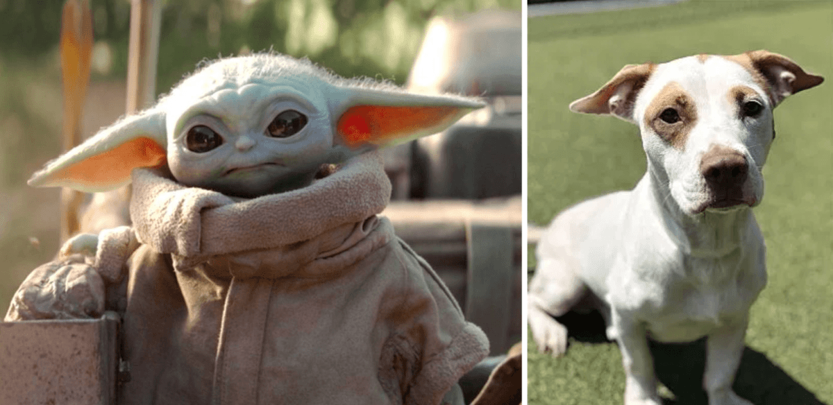 Found! 10 Baby Yoda lookalikes in Birmingham. Share yours and support a local nonprofit