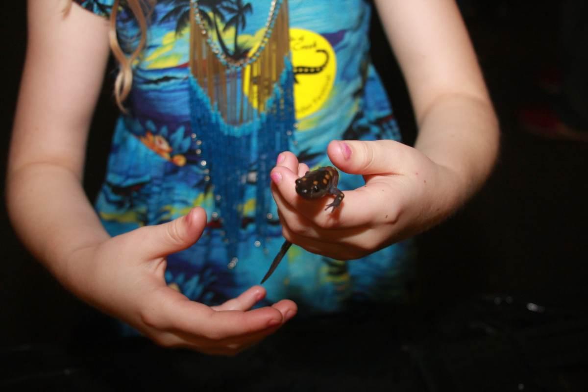The Salamander Festival