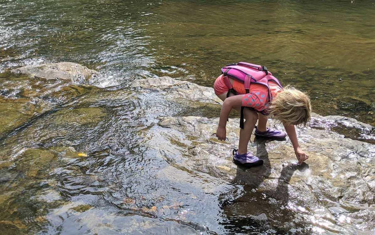 15 environmental nonprofits who need your support now, including Alabama Audubon