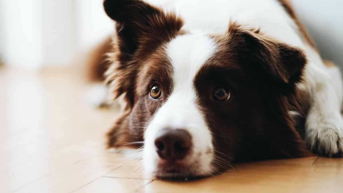 Keeping pups calm during the fireworks + how to respond to lost pets in Birmingham