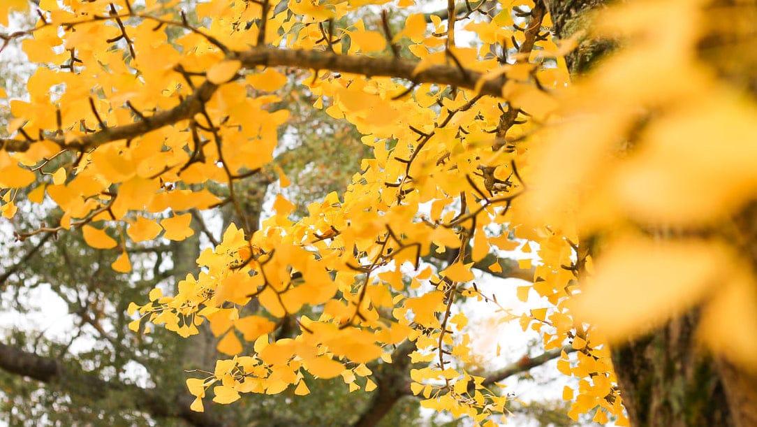 autumn in Birmingham Botanical Gardens