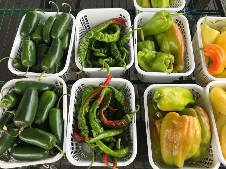peppers at Alabama Farmers Market at farmers markets in Birmingham