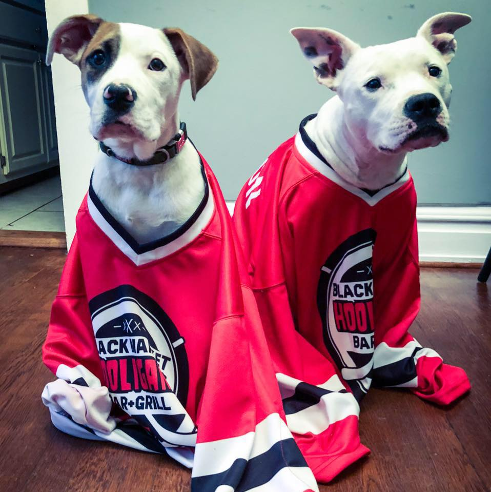 Dogs wearing Black Market Bar and Grill shirts