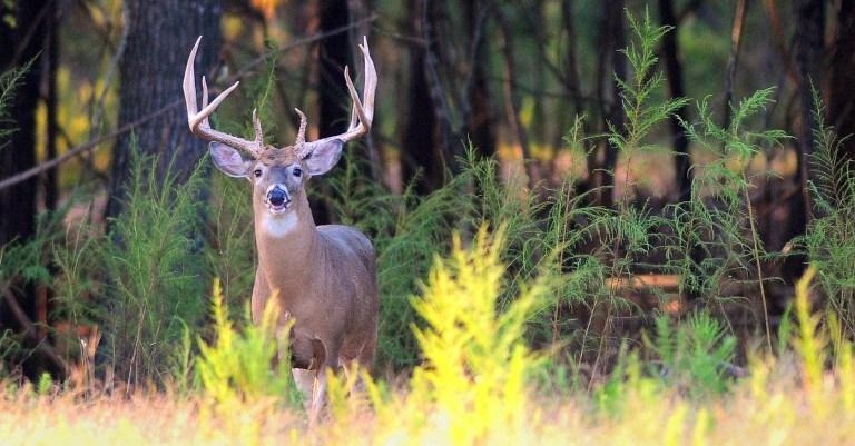 Dramatic photo of a buck