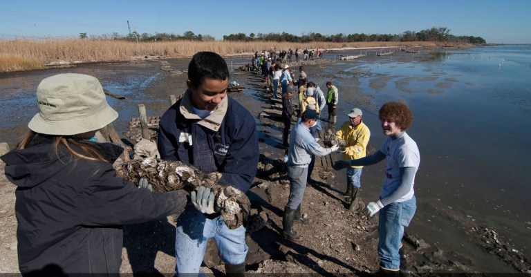 See how recycling 15.5M + oyster shells helps restore Alabama's shores