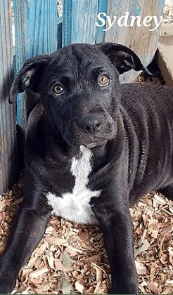 dog adoptable dogs birmingham