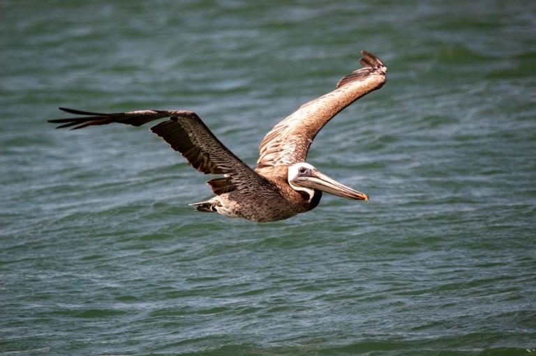 Alabama Audubon approves of G-League Squadron name