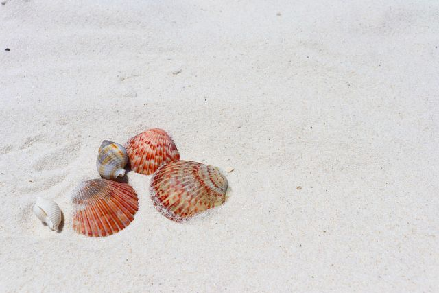 Gulf Shores & Orange Beach Tourism, seashells, beaches